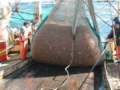 No más despojos pesqueros lanzados al mar