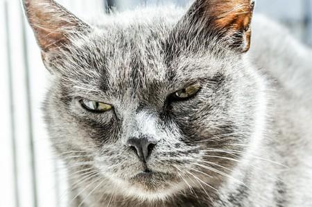 Cat 334383 1280