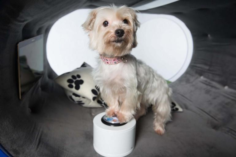 Foto de Samsung Dream Doghouse (7/11)