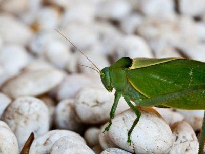 La Unión Europea regula la venta de insectos y algas como alimentos. ¿Será a partir de ahora la comida del futuro?