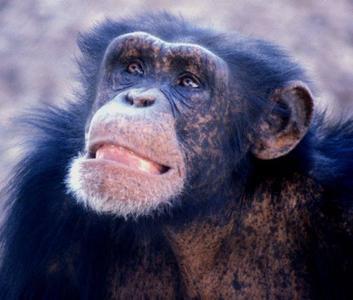 Bebés que captan sonrisas incluso en monos