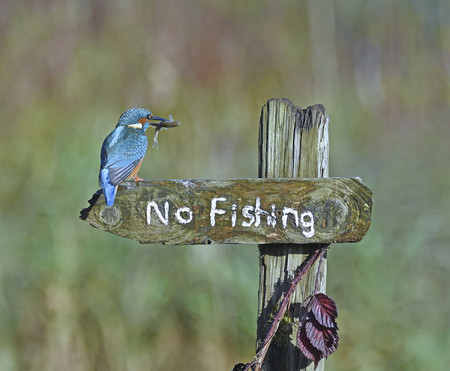 Sally Lloyd Jones Its A Mocking Bird 00001239
