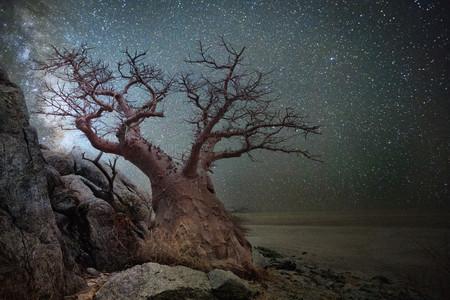 Lyratree