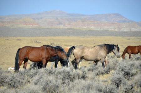 Horses 61158
