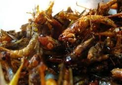 Insectos para el menú del día