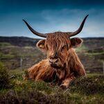 Dejar de comer carne puede contaminar más que no hacerlo debido al efecto rebote