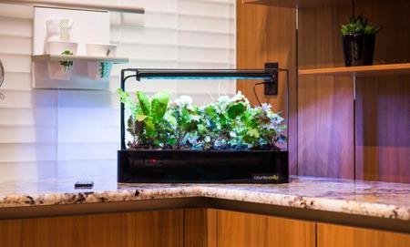 CounterCrop, la forma moderna para cultivar tus propios alimentos