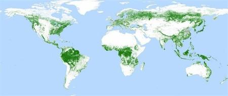 Un mapa global de bosques a resolución de 50 metros gracias al satélite alemán TanDEM-X