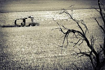 ¿Al borde de una crisis alimentaria global?
