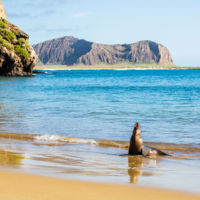 Esto es lo que se siente al nadar entre leones marinos, tiburones y tortugas en Galápagos