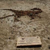 Se abrirán al público sitios paleontológicos: INAH
