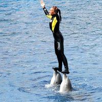 Mientras los delfines son prohibidos Ciudad de México, los perros guías ya pueden entrar a cualquier establecimiento