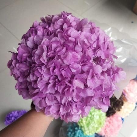 Hortensia violeta