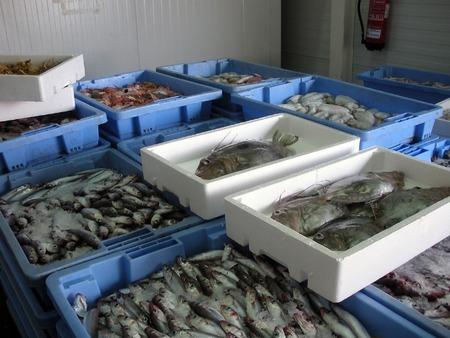 Máquina expendedora para pescado fresco