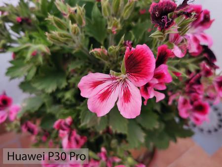 Huawei P30 Pro Macro 03