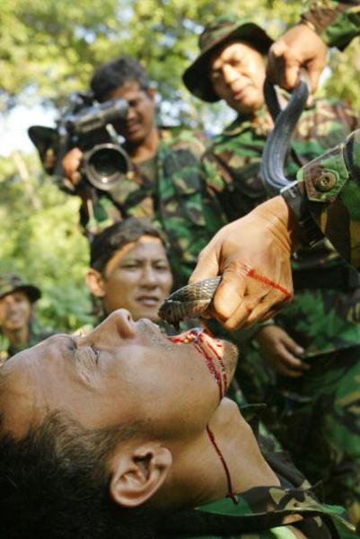 Java Sangre de serpiente