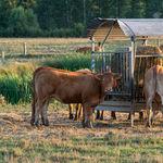 """El mito del """"producto local"""": lo que comes tiene más impacto medioambiental que su transporte"""