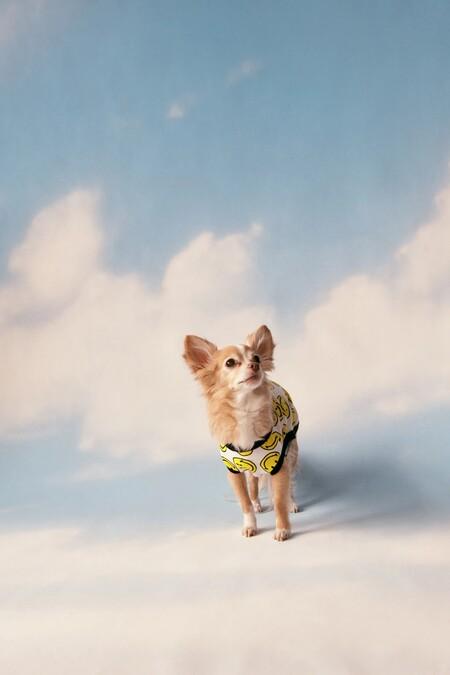 Zara Pet Smiley Collection 02