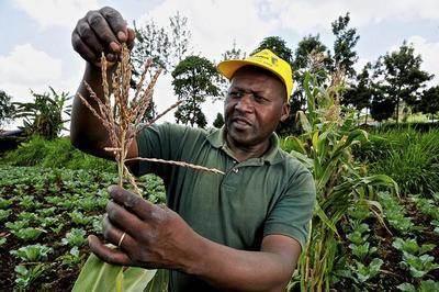 Microseguros contra la sequía: ¿ayuda al desarrollo o negocio?