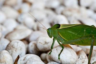 """""""Pan de insectos"""", un futuro proyecto para alimentar al mundo"""