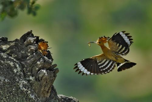 """""""Conocemos mejor un destino lejano que lo que tenemos cerca de casa"""", Jorge Sierra, fotógrafo de Naturaleza"""