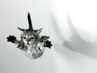 ¿Es cierto que los gatos siempre caen a cuatro patas?