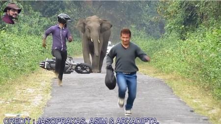 El elefante vuelve al ataque
