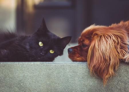 Tus mascotas también pueden donar sangre y ésta es importante para salvar a otras mascotas