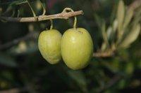 Cinco maneras de limpiar con aceite de oliva