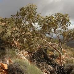 Foto 7 de 22 de la galería colores-del-gran-desierto-de-victoria en Xataka Ciencia