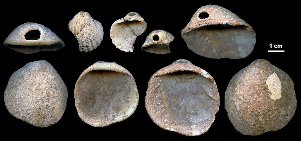 Neandertales Conchas 02