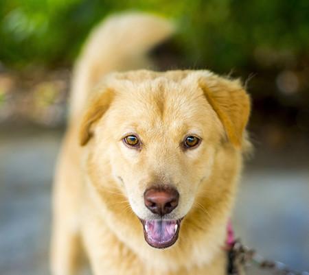 Como Fotografiar Mascotas I Perros 6