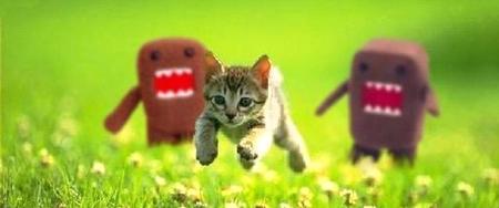 Cuando un desarrollador enferma su jefe mata un gatito