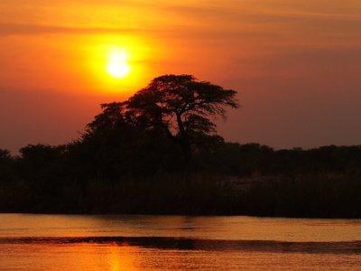 Nuestra salida (y regreso) de África: una cuestión de temperatura y comida andante