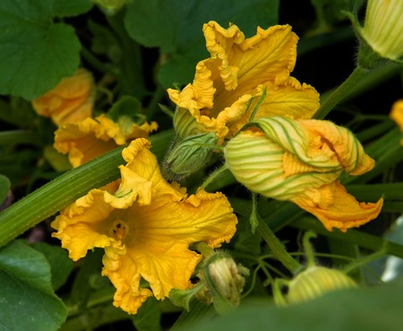 Pumpkin 3499815 1920