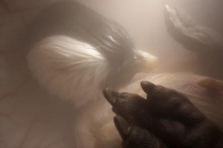 Penguin Imgur