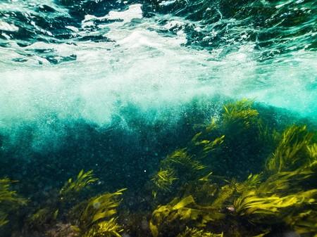 Popotes Algas Disuelven Solucion Libre Plastico Medio Ambiente
