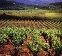 La Comisión Europea propone arrancar 400.000 hectáreas de viñedo