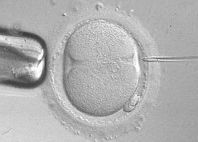 España, tercer país europeo en reproducción asistida