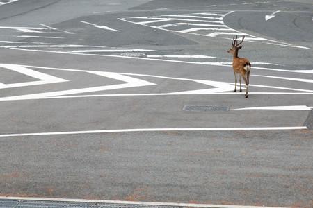 Planet Deer Yoko Ishii 6
