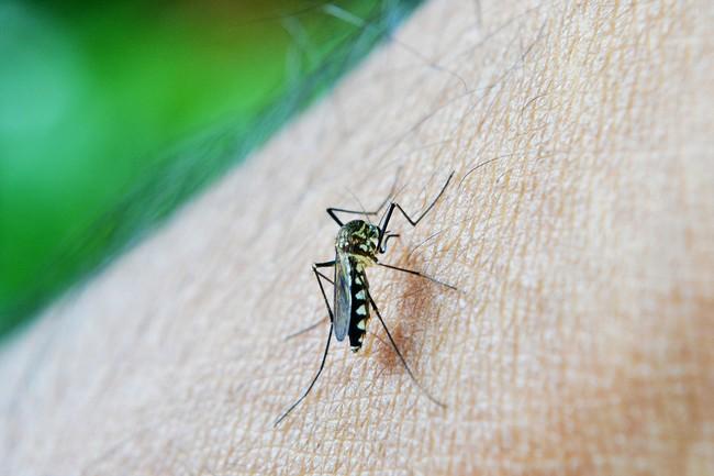 Mosquito 213805 1280
