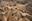 El desierto y el Museo de Arena de Tottori en Japón