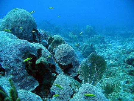Australia apuesta por la mayor reserva marina del mundo
