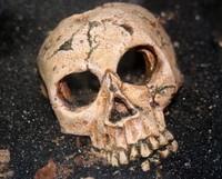 Según una nueva teoría el rostro humano evolucionó para adaptarse a los puñetazos