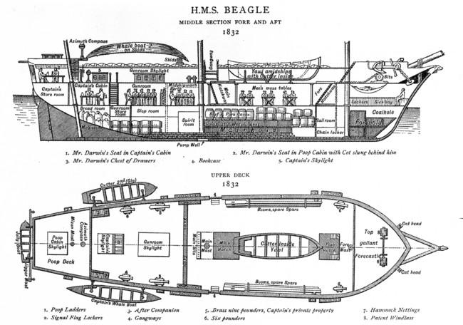 Darwin Bio tres Beagle Diagram