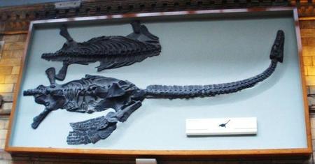 Diez criaturas prehistóricas que fueron bautizadas con nombres de famosos