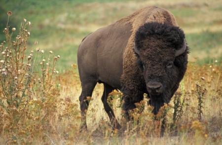El peligro de tirarse selfies mientras estás en Yellowstone