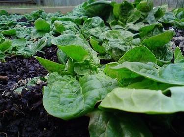 Verduras, agua y nitratos
