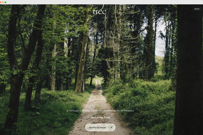 Esta web te ofrece un escape a la naturaleza con sonidos de bosques aleatorios alrededor del mundo