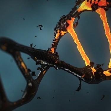 Corregir el 89% de las 75.000 mutaciones asociadas a enfermedades congénitas parece, de repente, posible: así es 'prime editing'